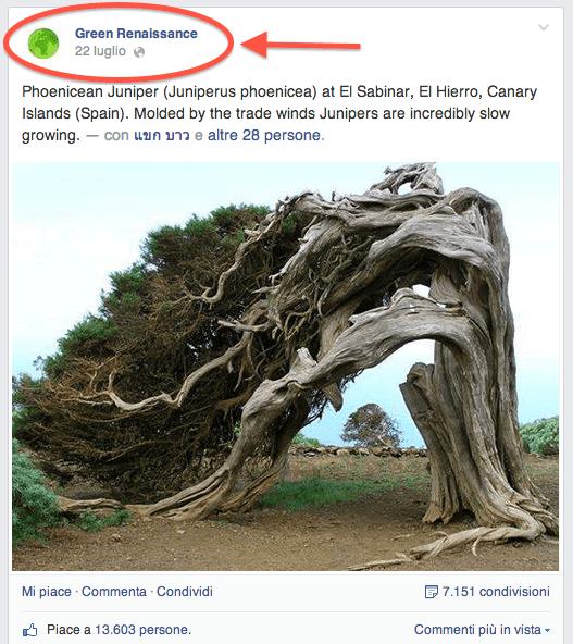 4 regole pagina Facebook - esempio post foto profilo